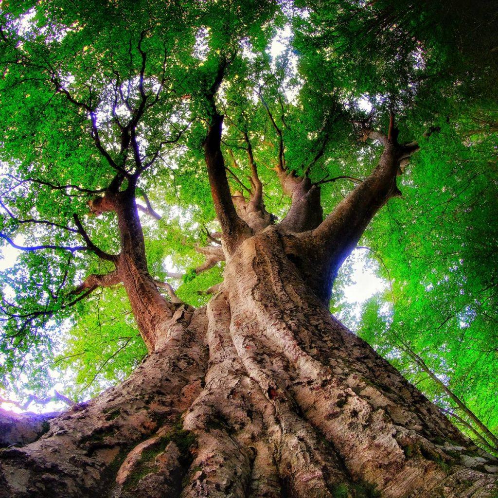 alberi in cammino
